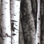 Birch Tree Grey