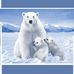 Polar Bears Blue